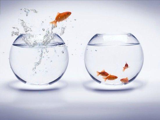创业公司是否该退出?被收购后会比原来发展的好吗?